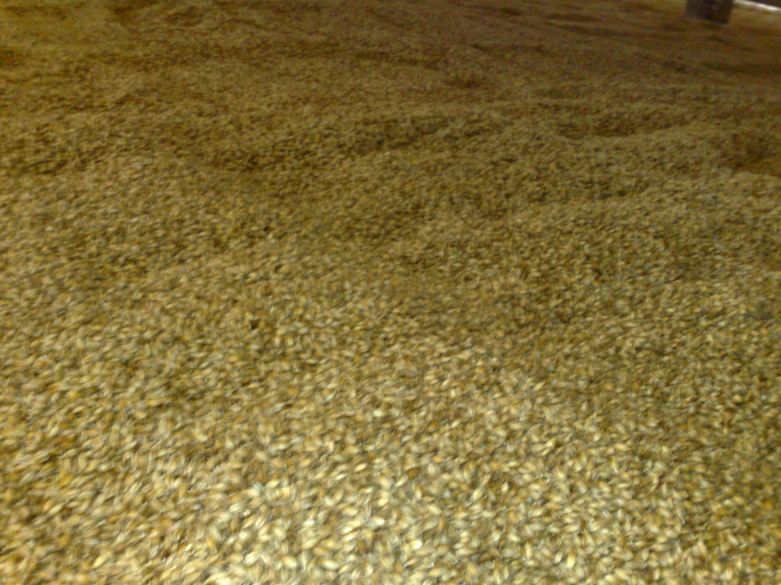 Laphroaig floormalting drying